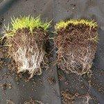 Mycorrhizae_2
